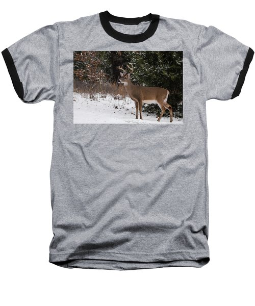 White-tailed Deer - 8904 Baseball T-Shirt