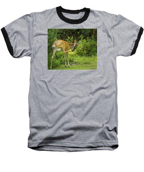 White Tailed Deer Scratching It's Nose Baseball T-Shirt by Ken Morris