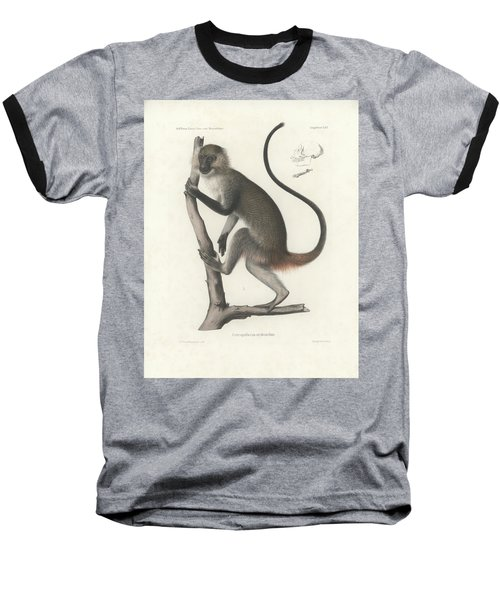 White Throated Guenon, Cercopithecus Albogularis Erythrarchus Baseball T-Shirt by J D L Franz Wagner