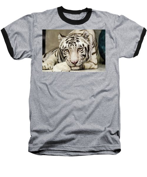 White Tiger Looking At You Baseball T-Shirt