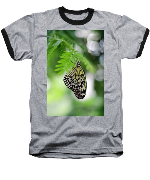 White Tree Nymph Butterfly 2 Baseball T-Shirt by Marie Hicks