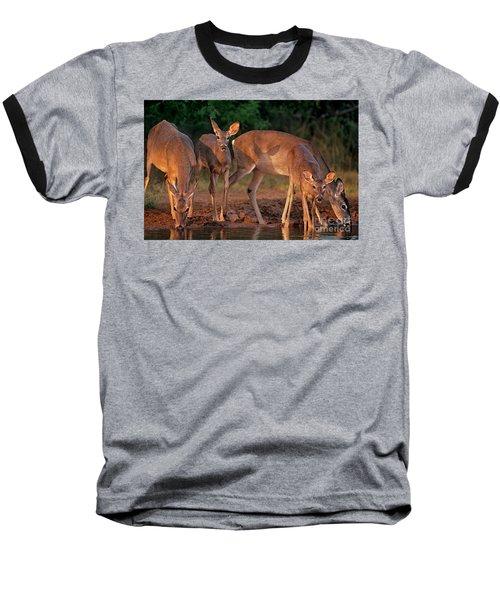 Whitetail Deer At Waterhole Texas Baseball T-Shirt