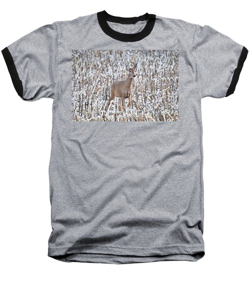 Whitetail In Frosted Corn 537 Baseball T-Shirt