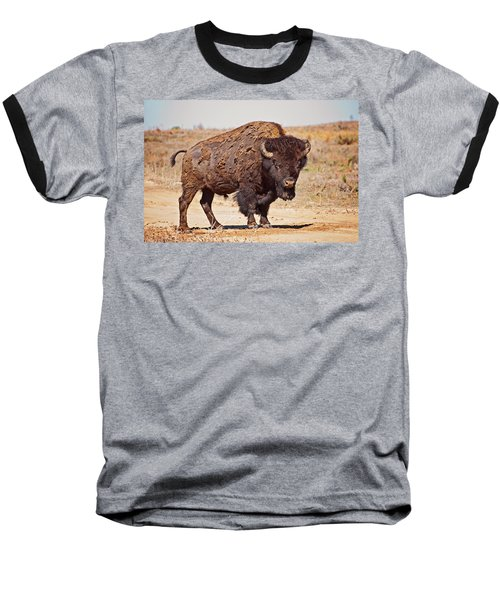 Wild Bison Baseball T-Shirt