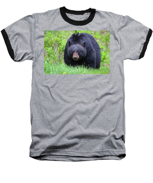 Wild Black Bear Baseball T-Shirt
