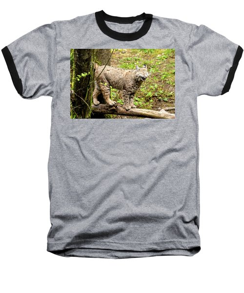Wild Bobcat In Mountain Setting Baseball T-Shirt by Teri Virbickis