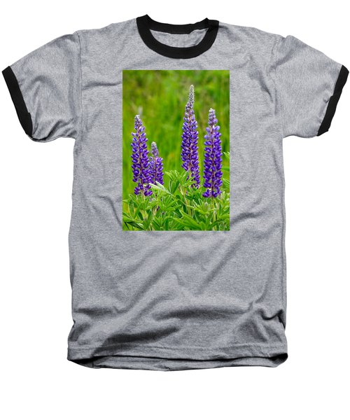 Wild Lupine Baseball T-Shirt by Karon Melillo DeVega