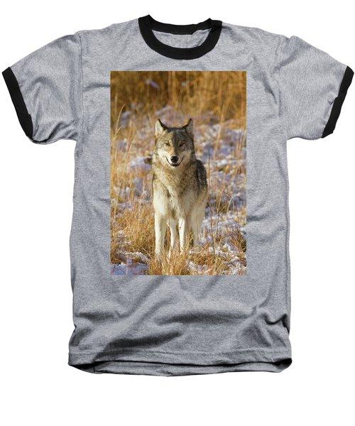 Wild Wolf Portrait Baseball T-Shirt