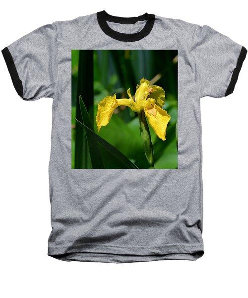 Wild Yellow Iris Baseball T-Shirt by Kathy Eickenberg