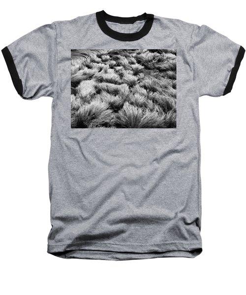 Windblown Grass Baseball T-Shirt