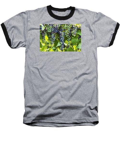 Wine Grape Colors Baseball T-Shirt by Teri Virbickis