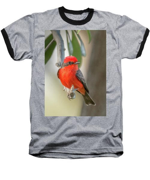 Winged Zorro Baseball T-Shirt