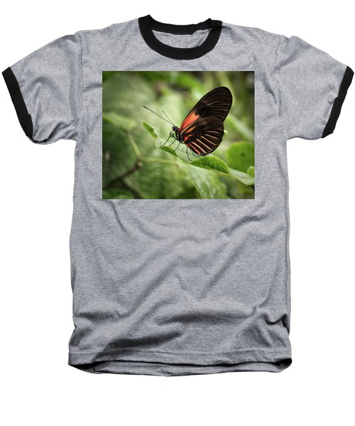 Wings Of The Tropics Butterfly Baseball T-Shirt