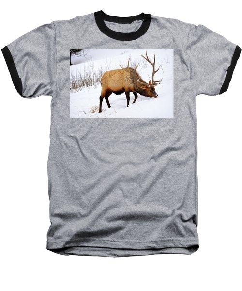 Winter Bull Baseball T-Shirt