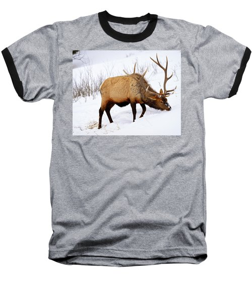 Winter Bull Baseball T-Shirt