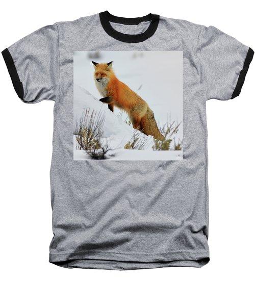 Winter Fox Baseball T-Shirt