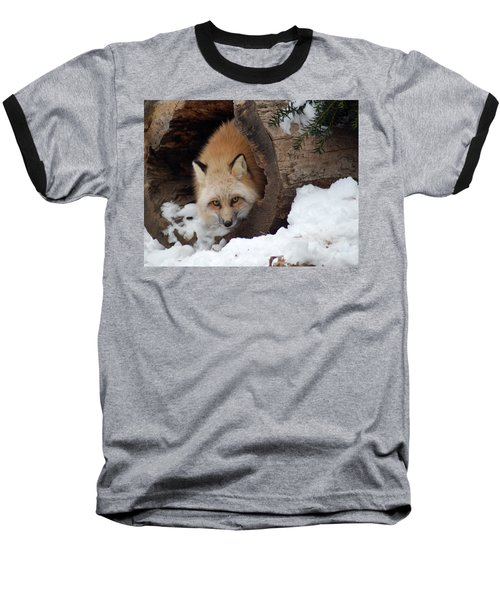 Winter Fox Baseball T-Shirt by Richard Bryce and Family