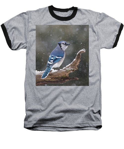 Baseball T-Shirt featuring the photograph Winter Jay by Mircea Costina Photography