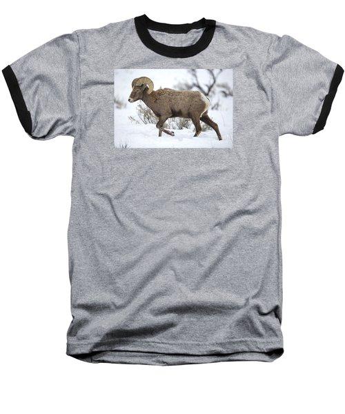 Winter Ram Baseball T-Shirt