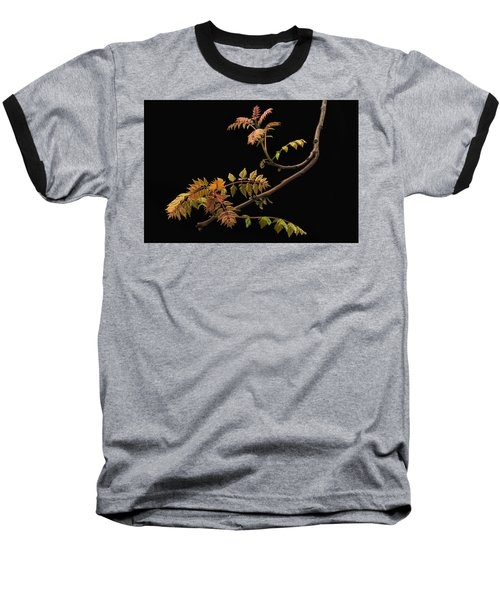 Wisteria Colors Baseball T-Shirt
