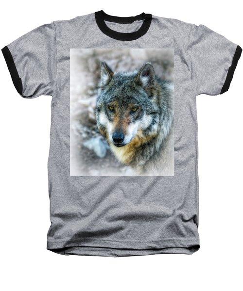 Wolf Gaze Baseball T-Shirt by Elaine Malott