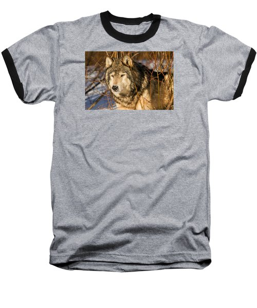 Wolf In Brush Baseball T-Shirt