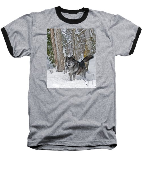 Wolf In Trees Baseball T-Shirt