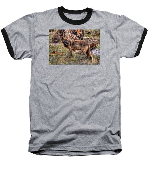 Wolf Looking Back Baseball T-Shirt by CR  Courson