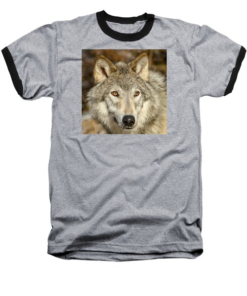Wolf Portrait Baseball T-Shirt