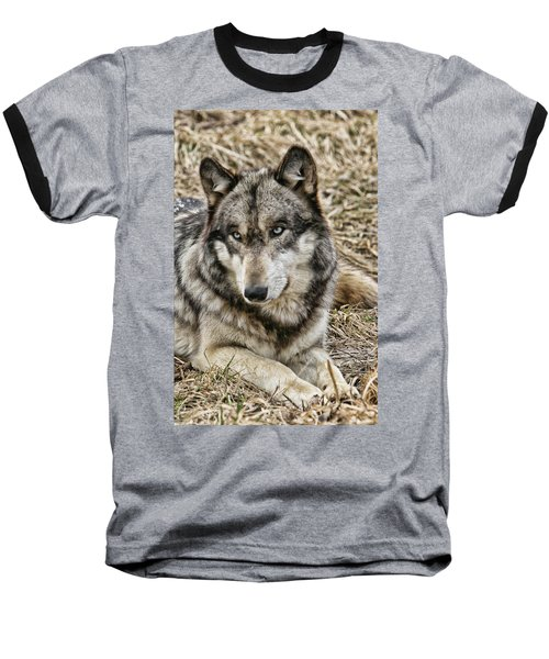 Wolf Portrait Baseball T-Shirt by Shari Jardina