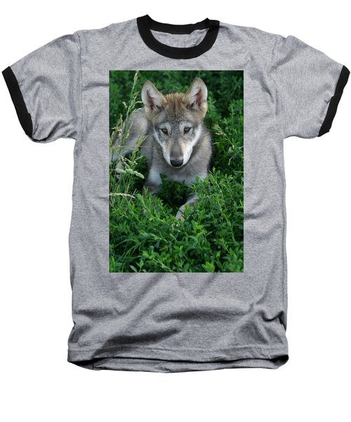 Wolf Pup Portrait Baseball T-Shirt by Shari Jardina