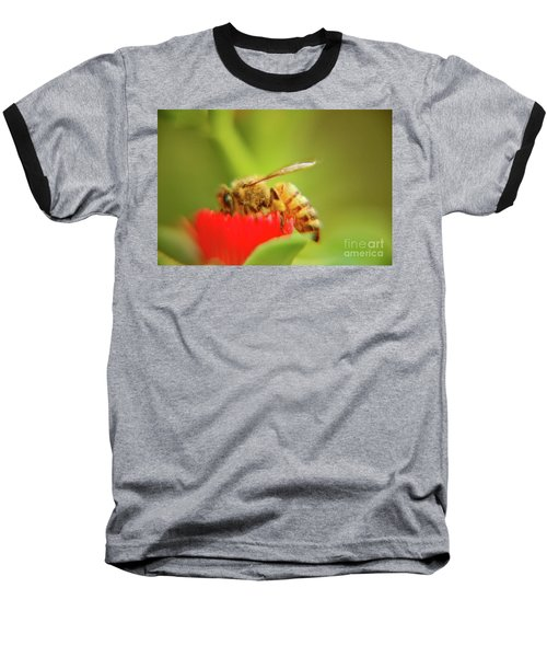 Baseball T-Shirt featuring the photograph Worker Bee by Micah May