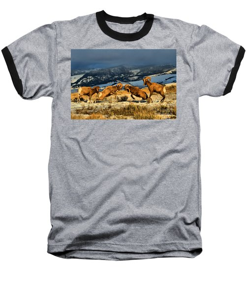 Baseball T-Shirt featuring the photograph Wyoming Bighorn Brawl by Adam Jewell