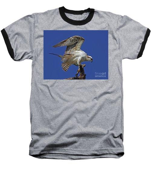 Yearling Osprey Baseball T-Shirt