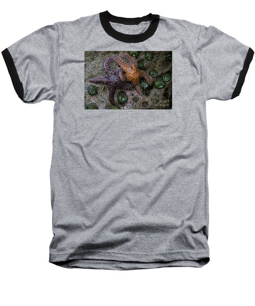 Orange And Purple Starfish II Baseball T-Shirt by Chuck Flewelling