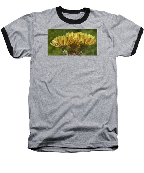 Yellow And Red Cactus Flowers Baseball T-Shirt by Elvira Butler