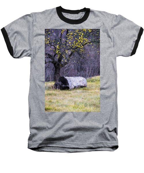 Yellow Apples Baseball T-Shirt