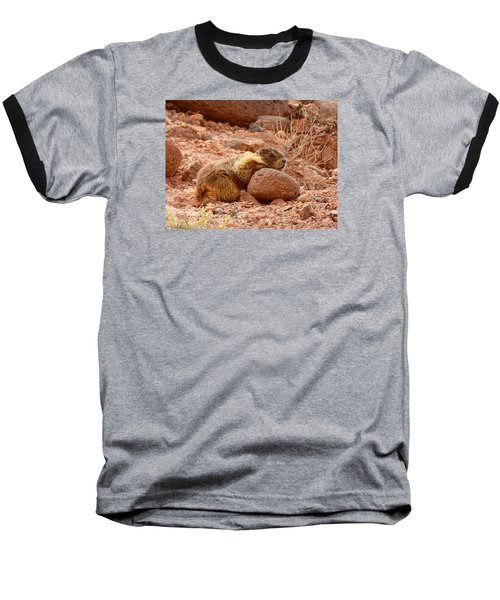 Yellow Bellied Marmot Capitol Reef Utah Baseball T-Shirt by Deborah Moen