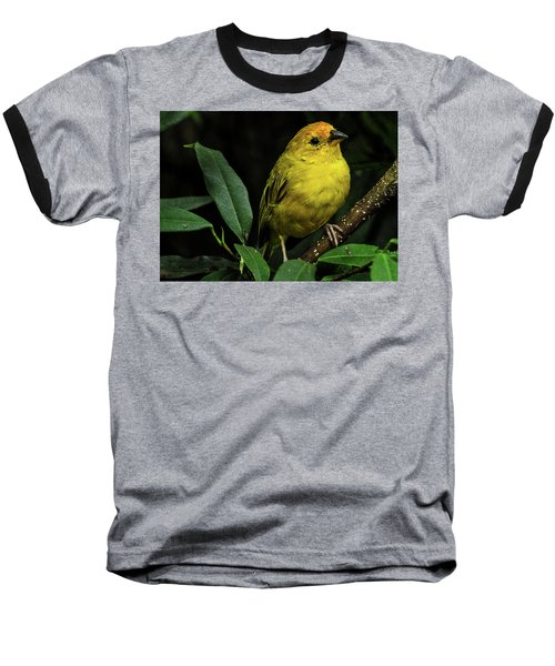 Yellow Bird Baseball T-Shirt