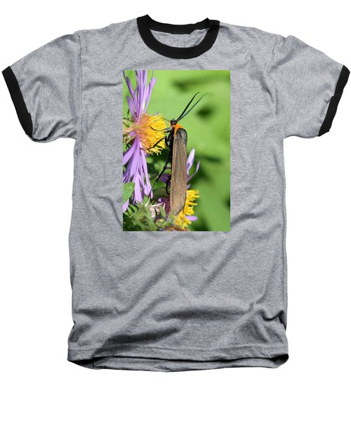 Baseball T-Shirt featuring the photograph Yellow-collared Scape Moth by Doris Potter