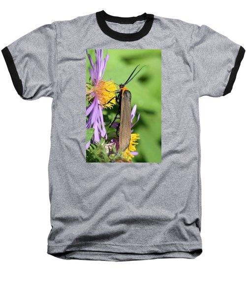 Yellow-collared Scape Moth Baseball T-Shirt by Doris Potter