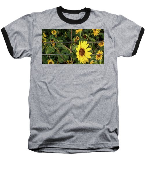 Yellow Flower Escaping From A Barb Wire Fence Baseball T-Shirt