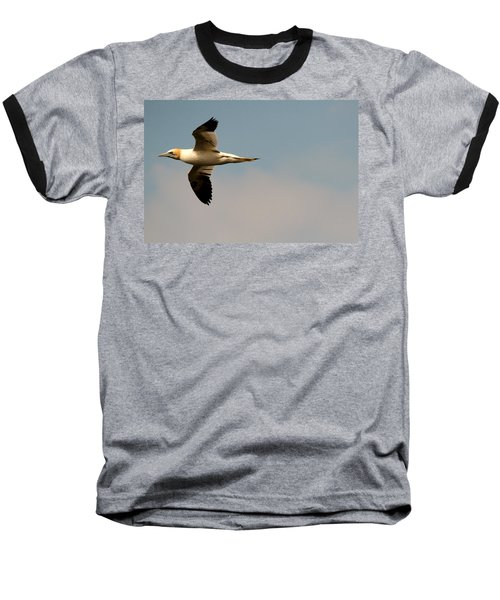 Yellow Headed Gull In Flight Baseball T-Shirt
