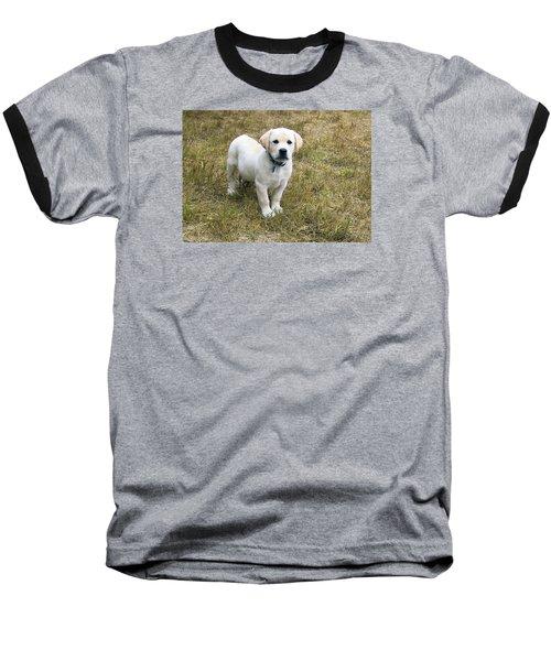 Yellow Labrador Puppy At Wanting To Play. Baseball T-Shirt