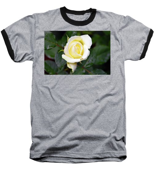 Yellow Rose 1 Baseball T-Shirt