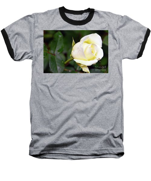 Yellow Rose 2 Baseball T-Shirt