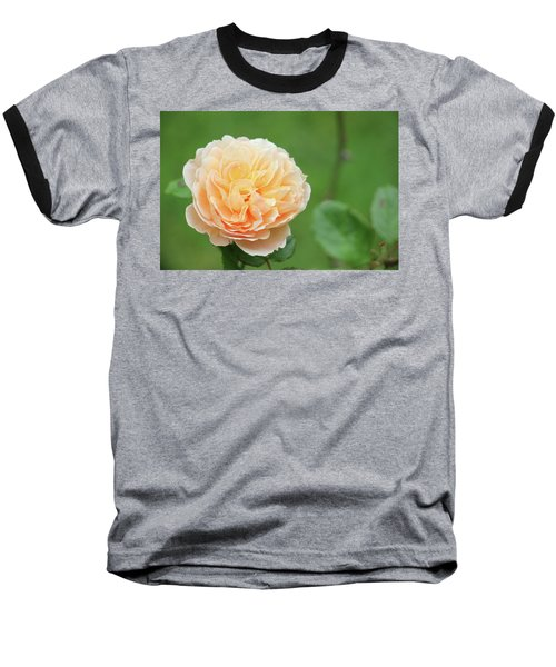 Yellow Rose In December Baseball T-Shirt by Kelly Hazel