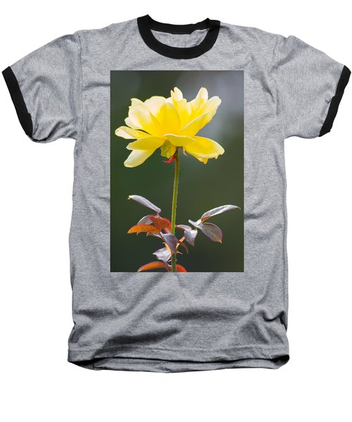 Yellow Rose Baseball T-Shirt