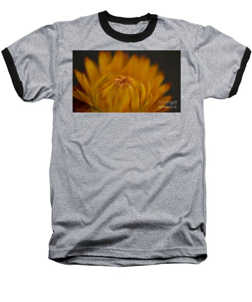 Yellow Strawflower Blossom Close-up Baseball T-Shirt
