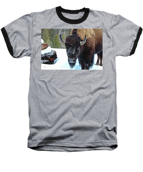 Yellowstone Buffalo Stare-down Baseball T-Shirt